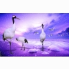 Red Crowned Cranes Japan Wallpapers