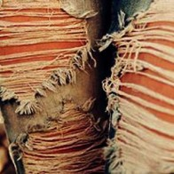 Ripped Jeans Cover