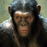 Rise Of The Planet Of The Apes Movie Wallpapers