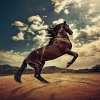 Download rising horse wallpapers, rising horse wallpapers Free Wallpaper download for Desktop, PC, Laptop. rising horse wallpapers HD Wallpapers, High Definition Quality Wallpapers of rising horse wallpapers.