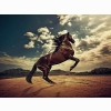 Rising Horse Wallpapers