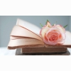 Rose Pink Flower Books Pages