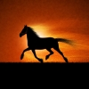 Download running horse wallpapers, running horse wallpapers Free Wallpaper download for Desktop, PC, Laptop. running horse wallpapers HD Wallpapers, High Definition Quality Wallpapers of running horse wallpapers.