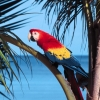 Download scarlet macaw hd wallpapers, scarlet macaw hd wallpapers Free Wallpaper download for Desktop, PC, Laptop. scarlet macaw hd wallpapers HD Wallpapers, High Definition Quality Wallpapers of scarlet macaw hd wallpapers.