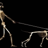 Download skull dog wallpapers, skull dog wallpapers  Wallpaper download for Desktop, PC, Laptop. skull dog wallpapers HD Wallpapers, High Definition Quality Wallpapers of skull dog wallpapers.