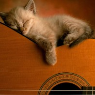 Sleeping Soundly Wallpapers