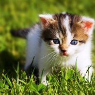 Small Cat Hd Wallpapers