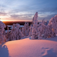 Snow Covered Trees Wallpapers
