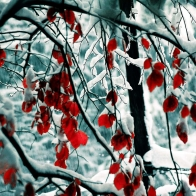 Snow Leaves Wallpapers