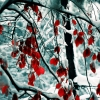 snow leaves,nature landscape Wallpapers, nature landscape Wallpaper for Desktop, PC, Laptop. nature landscape Wallpapers HD Wallpapers, High Definition Quality Wallpapers of nature landscape Wallpapers.