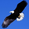 Download soaring liberty wallpapers, soaring liberty wallpapers Free Wallpaper download for Desktop, PC, Laptop. soaring liberty wallpapers HD Wallpapers, High Definition Quality Wallpapers of soaring liberty wallpapers.