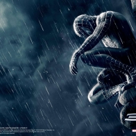 Spiderman In Rain Wallpaper