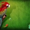 Download splash of parrot wallpapers, splash of parrot wallpapers Free Wallpaper download for Desktop, PC, Laptop. splash of parrot wallpapers HD Wallpapers, High Definition Quality Wallpapers of splash of parrot wallpapers.