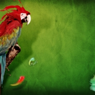 Splash Of Parrot Wallpapers