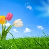 Download spring nature, spring nature  Wallpaper download for Desktop, PC, Laptop. spring nature HD Wallpapers, High Definition Quality Wallpapers of spring nature.