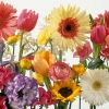 Download springtime arrangement, springtime arrangement  Wallpaper download for Desktop, PC, Laptop. springtime arrangement HD Wallpapers, High Definition Quality Wallpapers of springtime arrangement.