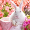 Download springtime hare wallpapers, springtime hare wallpapers Free Wallpaper download for Desktop, PC, Laptop. springtime hare wallpapers HD Wallpapers, High Definition Quality Wallpapers of springtime hare wallpapers.