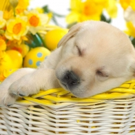 Springtime Snooze Wallpapers