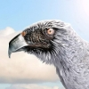 Download strange eagle wallpapers, strange eagle wallpapers Free Wallpaper download for Desktop, PC, Laptop. strange eagle wallpapers HD Wallpapers, High Definition Quality Wallpapers of strange eagle wallpapers.