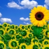 Download sunshine to brighten your day, sunshine to brighten your day  Wallpaper download for Desktop, PC, Laptop. sunshine to brighten your day HD Wallpapers, High Definition Quality Wallpapers of sunshine to brighten your day.