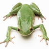 Download the frogs hd wallpapers, the frogs hd wallpapers Free Wallpaper download for Desktop, PC, Laptop. the frogs hd wallpapers HD Wallpapers, High Definition Quality Wallpapers of the frogs hd wallpapers.