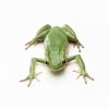 The Frogs Hd Wallpapers