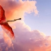 Download the roseate spoonbill wallpapers, the roseate spoonbill wallpapers Free Wallpaper download for Desktop, PC, Laptop. the roseate spoonbill wallpapers HD Wallpapers, High Definition Quality Wallpapers of the roseate spoonbill wallpapers.