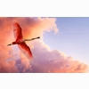 The Roseate Spoonbill Wallpapers