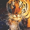 Download tiger cover, tiger cover  Wallpaper download for Desktop, PC, Laptop. tiger cover HD Wallpapers, High Definition Quality Wallpapers of tiger cover.