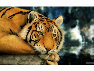 Tiger Painting Wallpapers