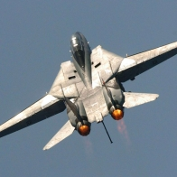 Tomcat Wallpaper
