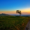 tree and the sunset,nature landscape Wallpapers, nature landscape Wallpaper for Desktop, PC, Laptop. nature landscape Wallpapers HD Wallpapers, High Definition Quality Wallpapers of nature landscape Wallpapers.