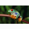 Tree Frogs Hd Wallpapers