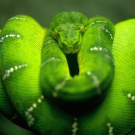 Tree Snake Hd Wallpapers