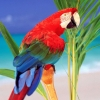 Download tropical colors parrot wallpapers, tropical colors parrot wallpapers Free Wallpaper download for Desktop, PC, Laptop. tropical colors parrot wallpapers HD Wallpapers, High Definition Quality Wallpapers of tropical colors parrot wallpapers.