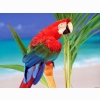 Tropical Colors Parrot Wallpapers