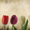 Download Tulips Vintage wallpaper HD & Widescreen Games Wallpaper from the above resolutions. Free High Resolution Desktop Wallpapers for Widescreen, Fullscreen, High Definition, Dual Monitors, Mobile