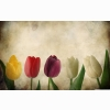 Tulips Vintage Wallpaper