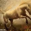 Download unicorn cover, unicorn cover  Wallpaper download for Desktop, PC, Laptop. unicorn cover HD Wallpapers, High Definition Quality Wallpapers of unicorn cover.