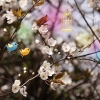 Download welcome spring, welcome spring  Wallpaper download for Desktop, PC, Laptop. welcome spring HD Wallpapers, High Definition Quality Wallpapers of welcome spring.