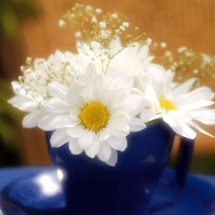 White Glowing Flowers