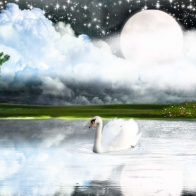 White Goose Hd Wallpaper 3