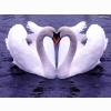 White Goose Hd Wallpaper 4