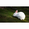 White Rabbit Hd Wallpapers
