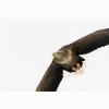 White Tailed Eagle Japan Wallpapers