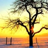 Download winter tree cover, winter tree cover  Wallpaper download for Desktop, PC, Laptop. winter tree cover HD Wallpapers, High Definition Quality Wallpapers of winter tree cover.
