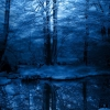 winter woodland,nature landscape Wallpapers, nature landscape Wallpaper for Desktop, PC, Laptop. nature landscape Wallpapers HD Wallpapers, High Definition Quality Wallpapers of nature landscape Wallpapers.