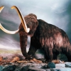 Download woolly mammoth wallpapers, woolly mammoth wallpapers Free Wallpaper download for Desktop, PC, Laptop. woolly mammoth wallpapers HD Wallpapers, High Definition Quality Wallpapers of woolly mammoth wallpapers.