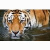 Wuppertal Tiger Wallpapers