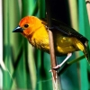 Download yellow birds hd wallpapers, yellow birds hd wallpapers Free Wallpaper download for Desktop, PC, Laptop. yellow birds hd wallpapers HD Wallpapers, High Definition Quality Wallpapers of yellow birds hd wallpapers.